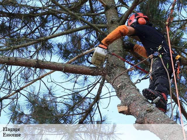 elagage arbre 91