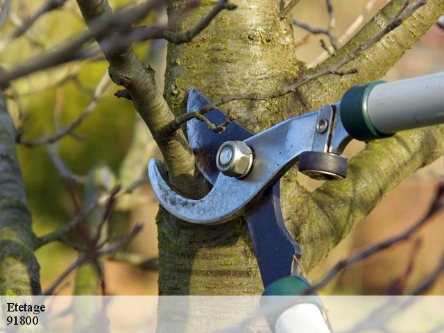 elagage arbre brunoy