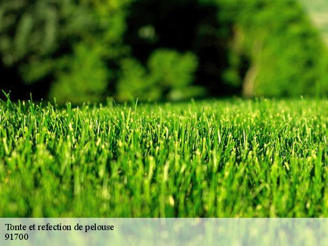 tonte de pelouse sainte genevieve des bois t l. Black Bedroom Furniture Sets. Home Design Ideas